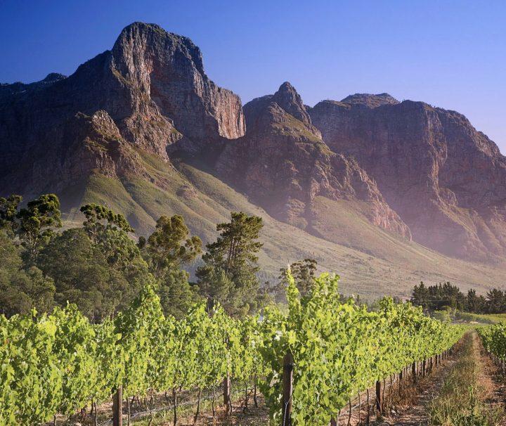 Vignobles de Franschhoek dans la région du Cap en Afrique du Sud