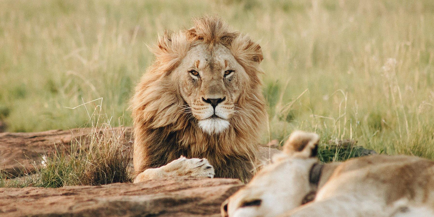 Safari 4×4 au Parc Kruger