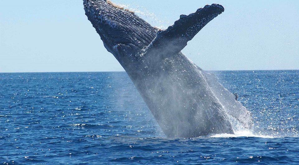 observation de baleines à Hermanus en Afrique du Sud