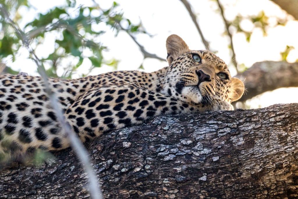 Photo d'itinéraire voyage en Afrique du Sud - Les incontournables de l'Afrique du Sud