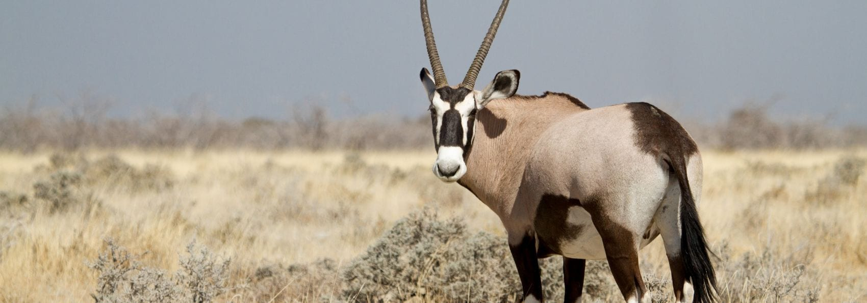 Aventure safari en Namibie