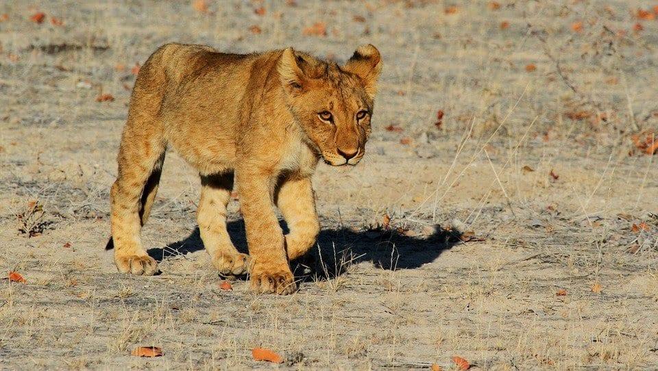 safari au mozambique