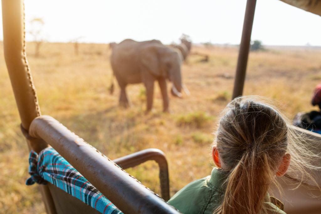 Safari en Afrique du Sud depuis un véhicule tout-terrain et éléphant
