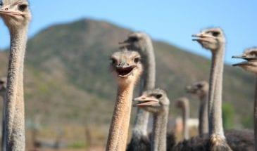 Autotour en famille au Cap