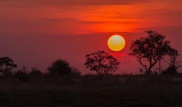 voyage botswana pas cher