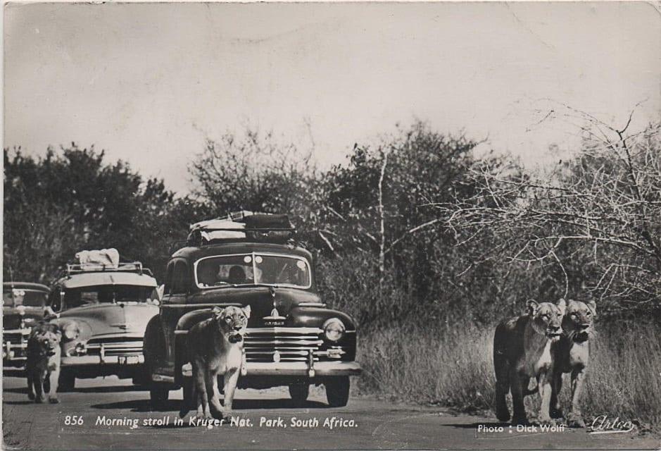 Photo historique et en noir et blanc du parc Kruger en Afrique du Sud