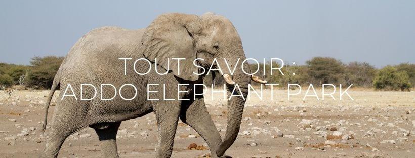 """Header de l'article """"Tout savoir sur Addo Elephant Park"""""""
