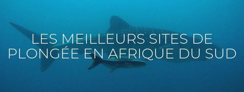 """Header de l'article du blog """"Meilleurs spots de plongée en Afrique du Sud"""""""