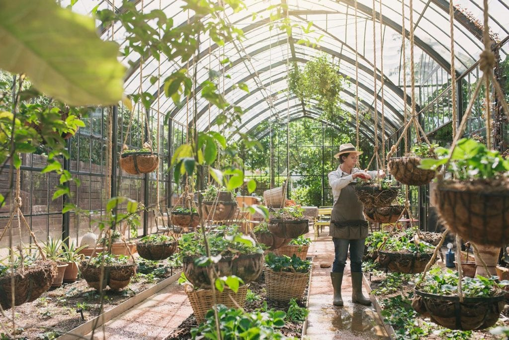 Jardinier dans la Green House de Babylonstoren à Franshhoek sur la Route des Vins