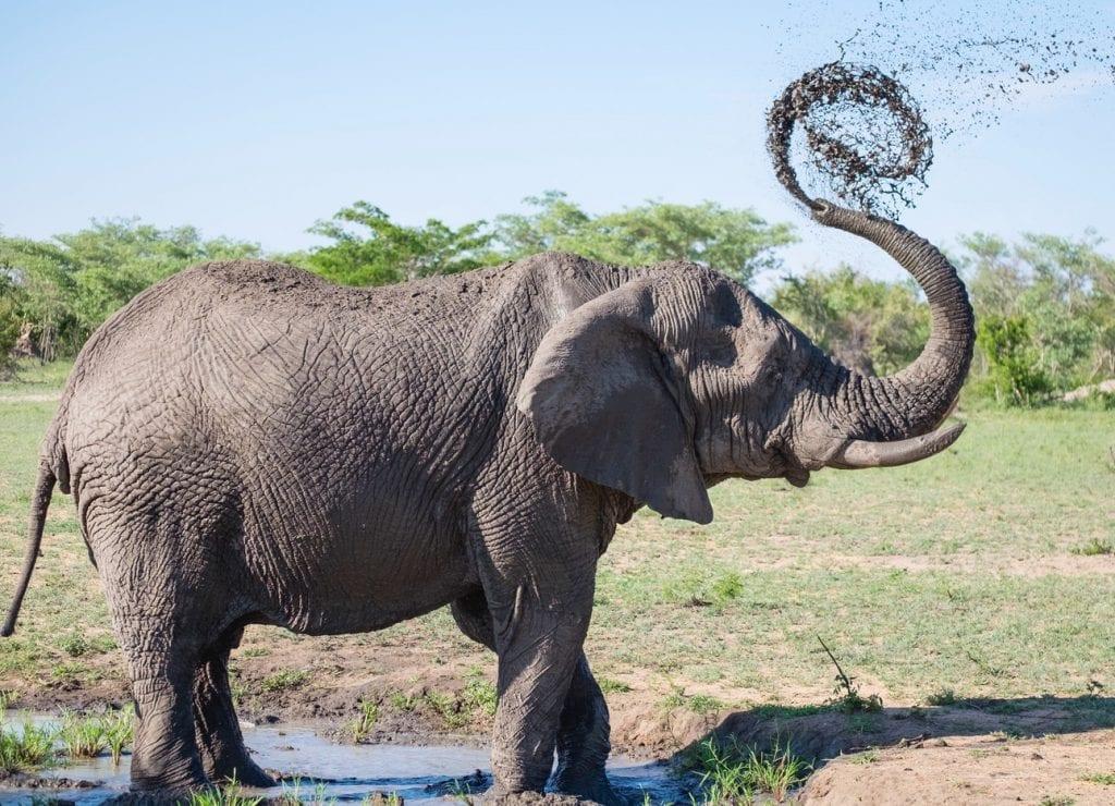 Un éléphant jouant avec sa trompe à Addo Elephant Park