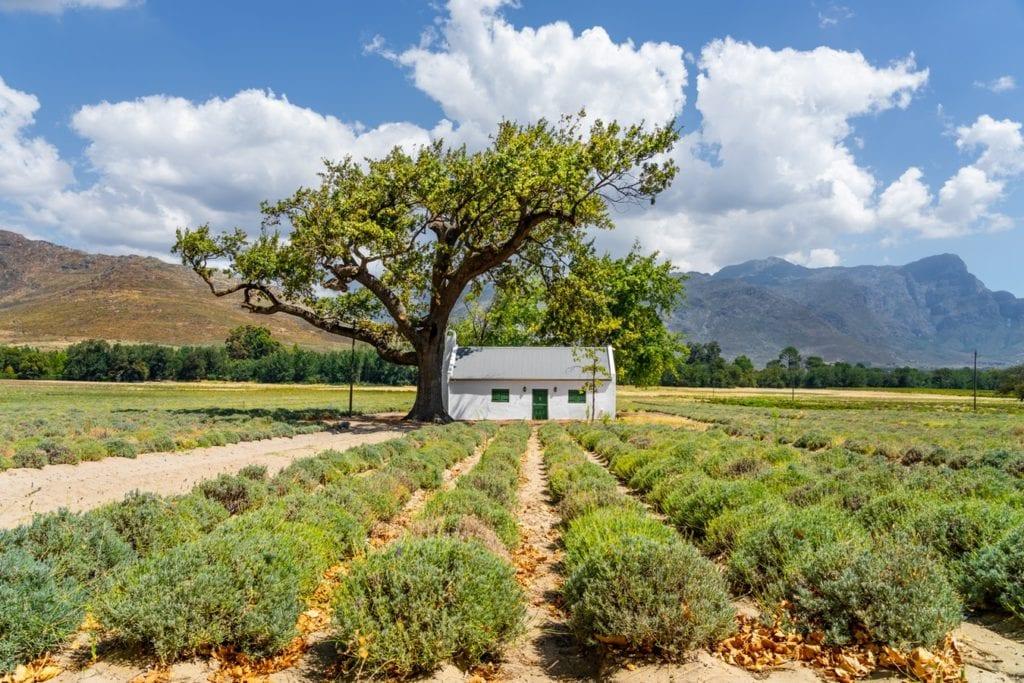 Maison du style Cape Dutch Architecture dans les vignobles du Cap sur la Route des Vins