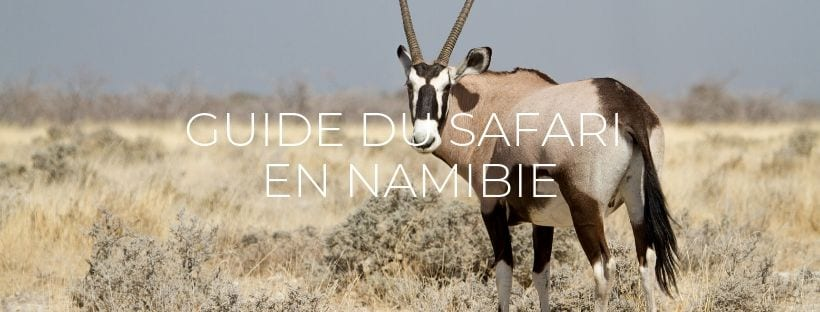 "Header du blog post ""Guide du safari en Namibie"""