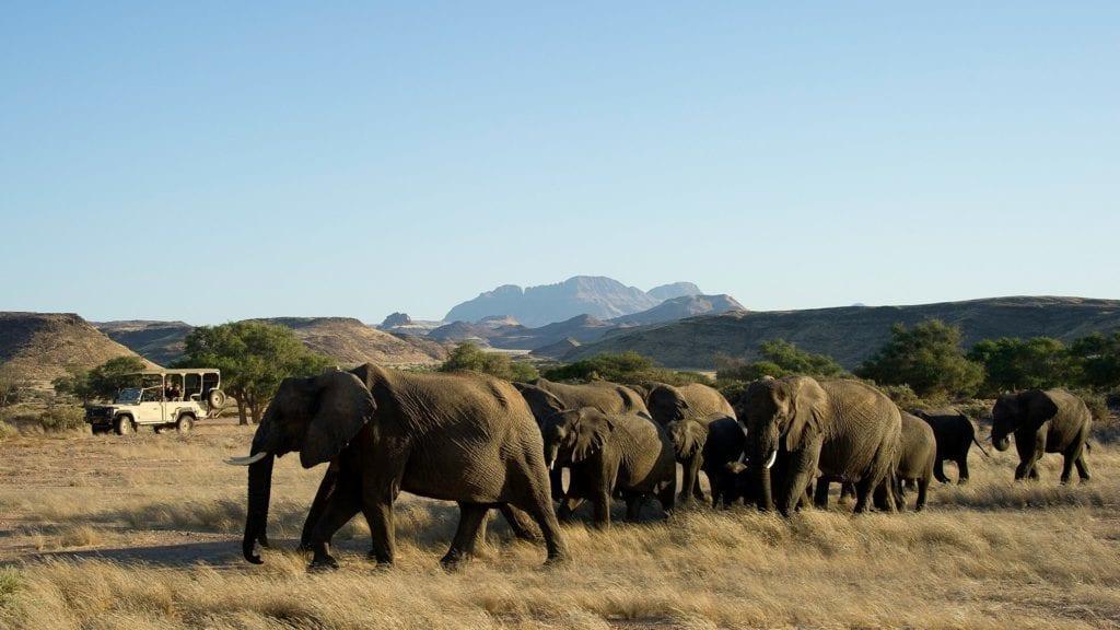 Troupeaux d'éléphants dans le Damaraland pour un safari en Namibie