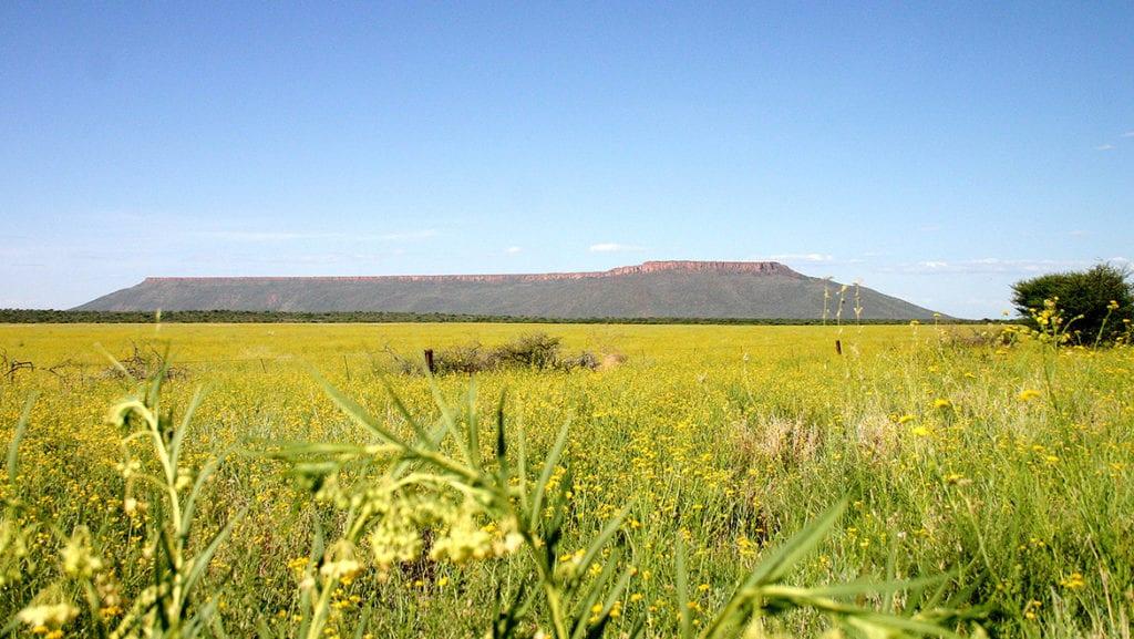 Le plateau de Waterberg est surnommé la Table Mountain de Namibie.