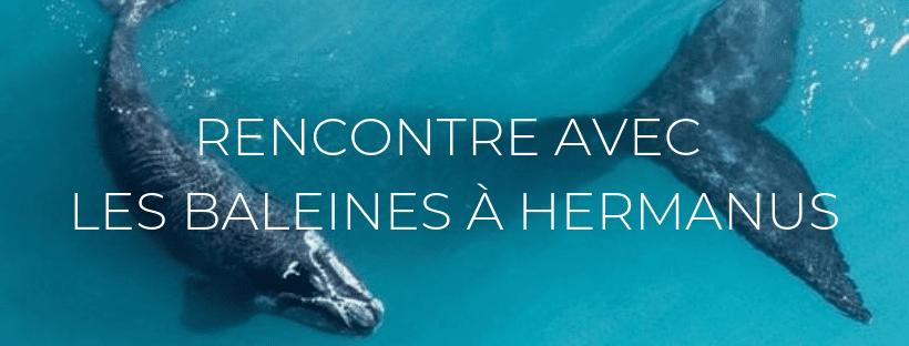 """Header de l'article """"Rencontre avec les baleines à Hermanus"""""""