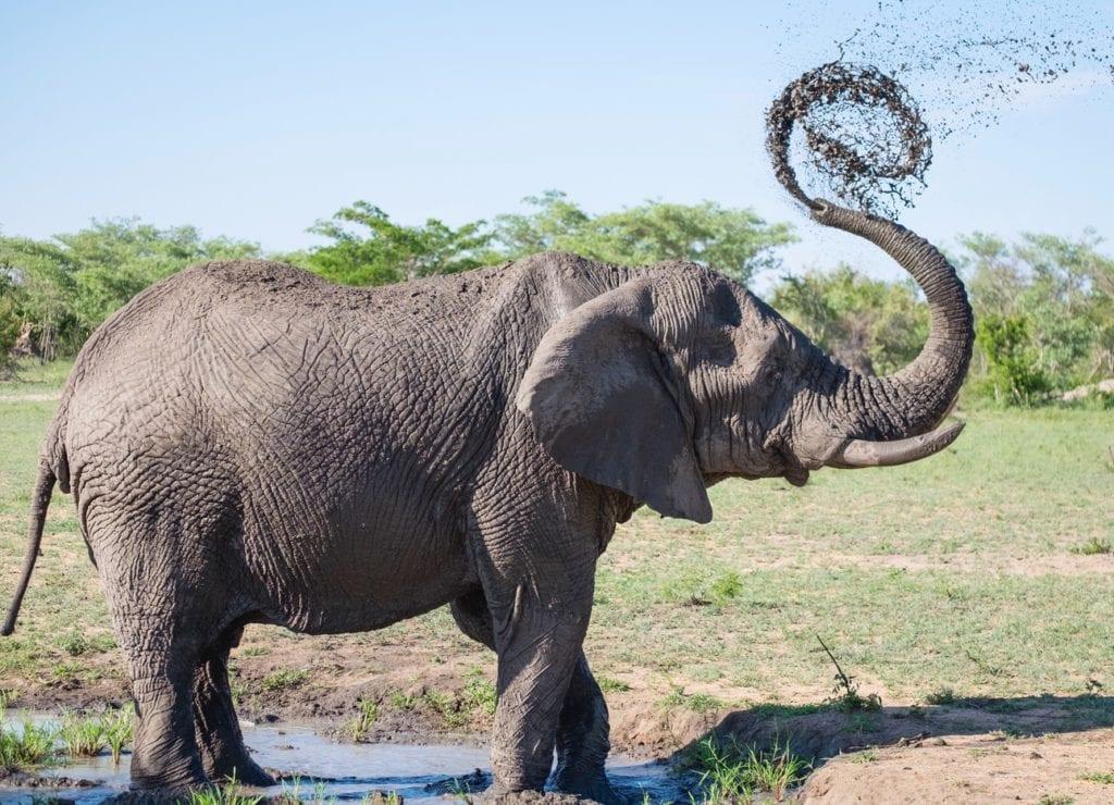 Un éléphant dans le Parc Addo Elephant, dernière étape de notre road trip sur la Garden Route.