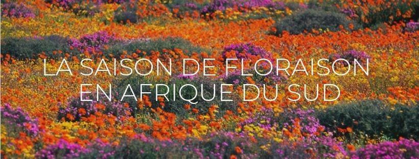 Header-Saison-de-la-Floraison-en-Afrique-du-Sud