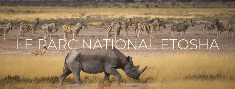 "Header de l'article ""Le Parc National d'Etosha"""