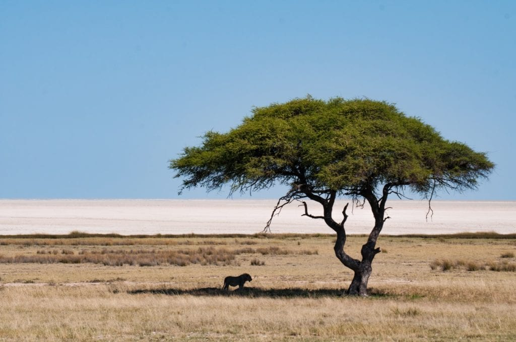 Photo de paysage au Parc National Ethosa