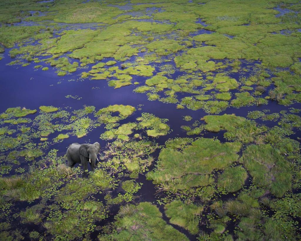 Itinéraire Voyage de Noces au Botswana : Un éléphant vue du ciel au Delta de l'Okavango au Botswana.