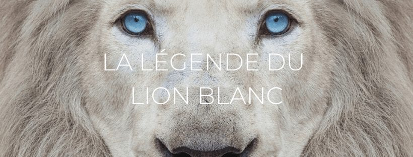 Header La légende du lion blanc