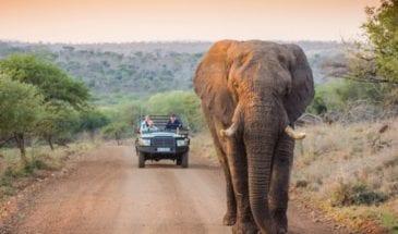 Parc National Kruger - Itinéraire Voyage Mozambique Kruger Afrique du Sud - SATravellers