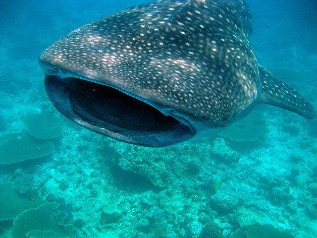 faune-marine-mozambique-que-faire-et-voir