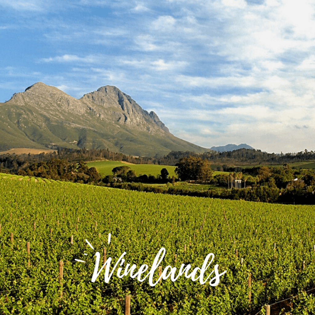 winelands-cape-town