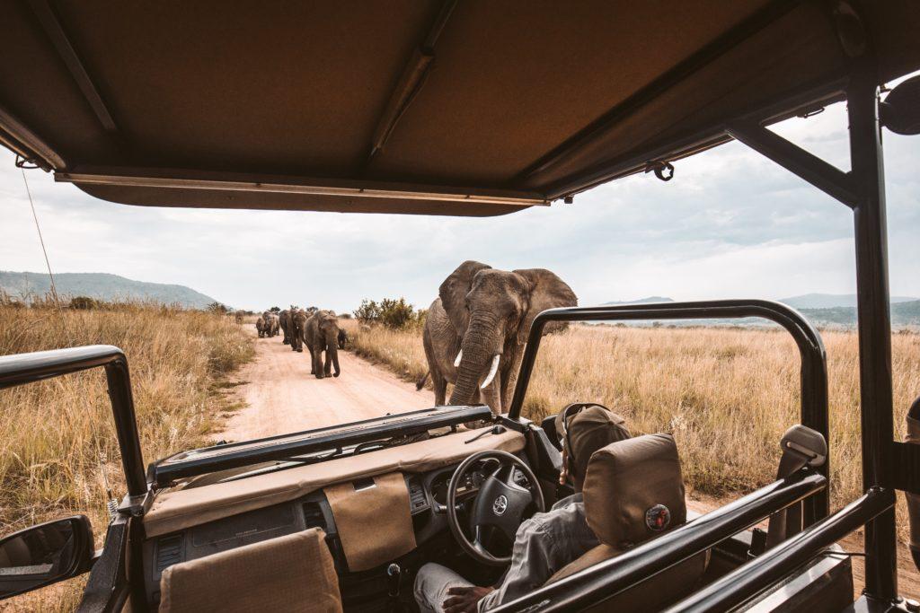 game-drive-safari2