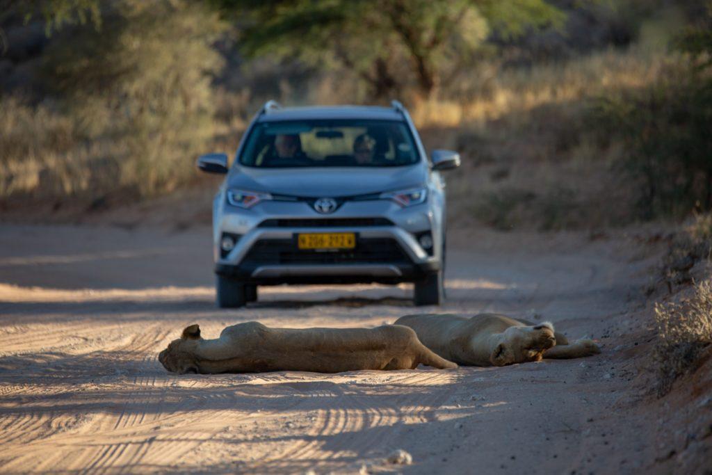 self-drive-safari