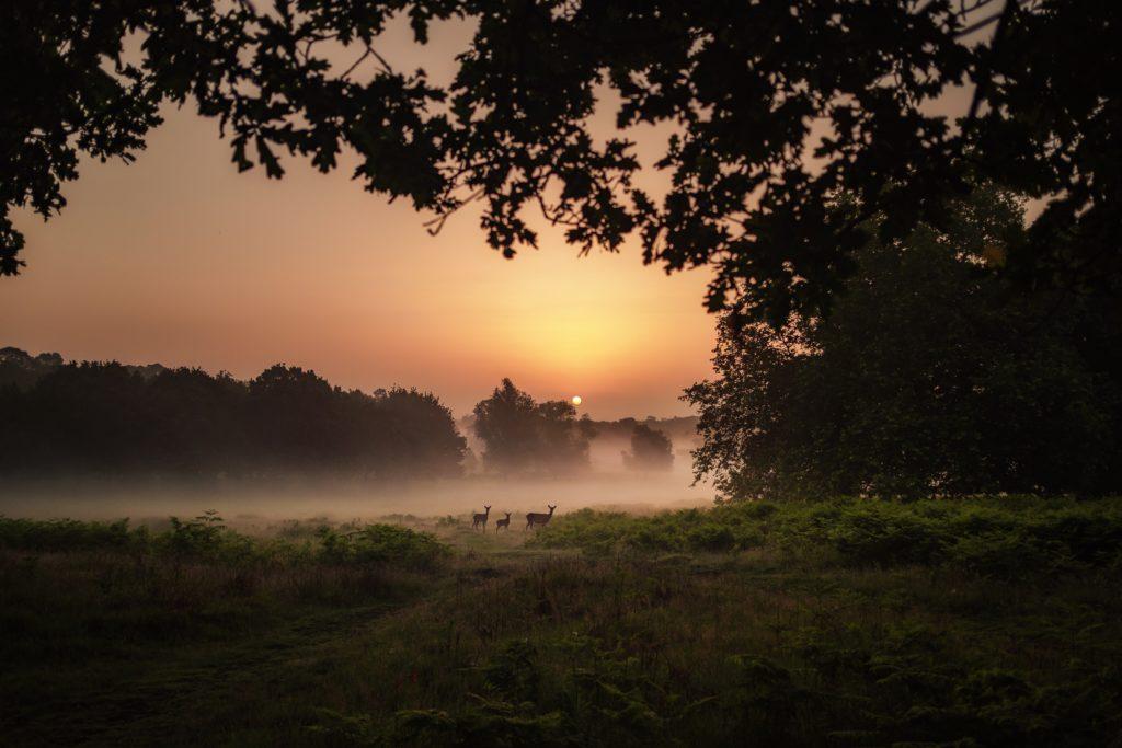 sunrise-safari